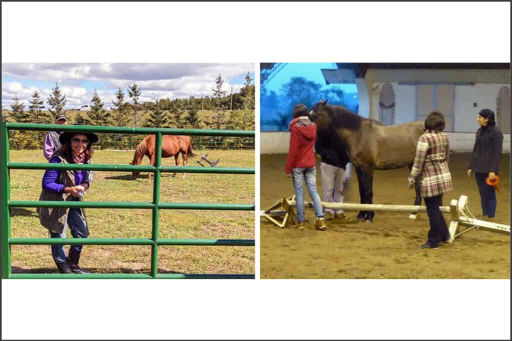 horses and people in corral